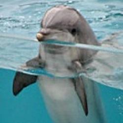 Seja o Golfinho